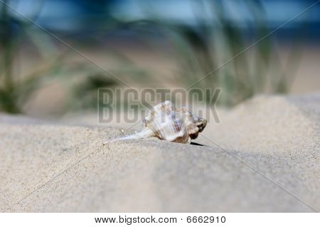 A beautiful crabs shell/home on a sand dune, with the ocean and beautiful blue sky in the background. poster