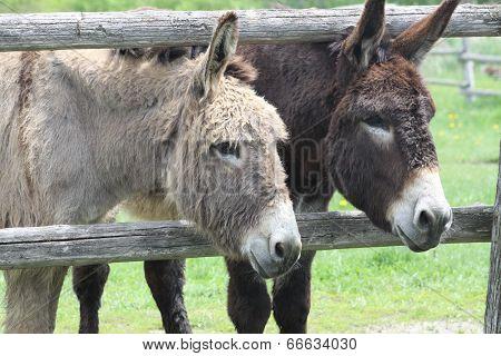 Donkey's (Brown & Gray)