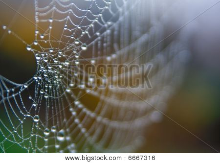 Spider Web With Morning Dew And Short Depth Of Field
