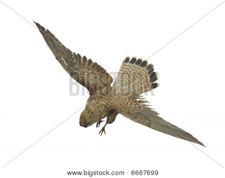flying birds of prey under the white background poster