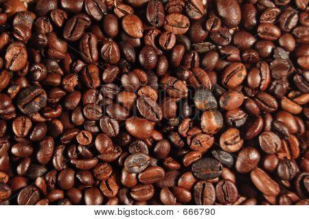Granos de café 01