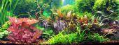 Decorative aquarium. Beautiful decoration for a desktop. poster