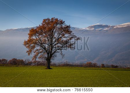 Tree In A Field At Fall