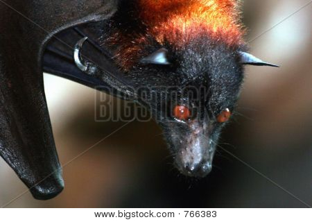 bat with glowing eyes