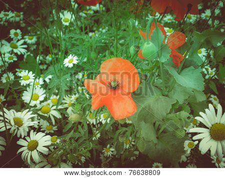 Retro Look Papaver Flower