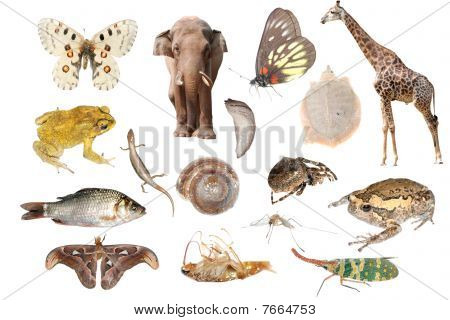 animal collection set isolated in white background. poster