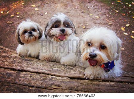 three white mixed breed dog at a public nature park