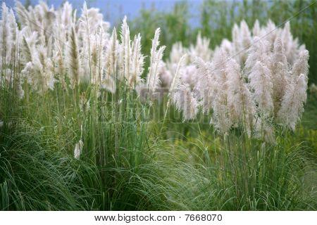 wild spike savana flower background