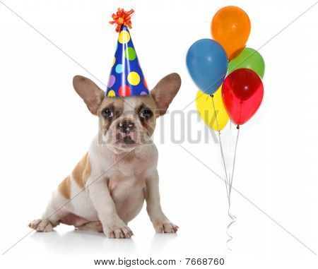 Dog With Birthday Party Hat And Balloons