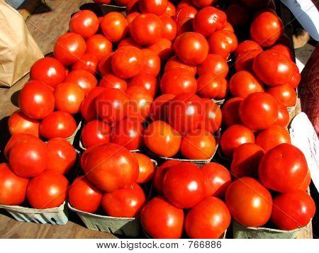 Tomato 003