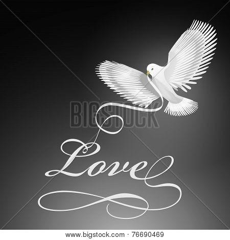 Dove bird of love