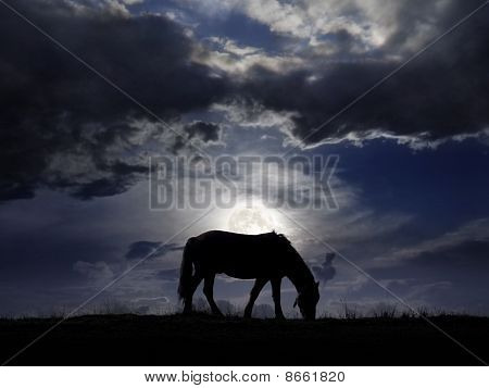 Pasture In The Moonlight