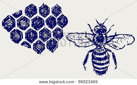 Working bee on honeycells
