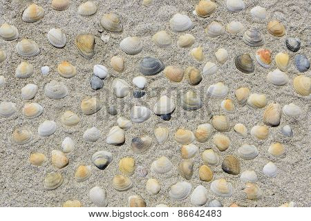 heart shaped colored sea shells in sand at beach