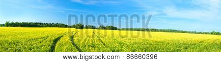 Summer Rural Landscape A Panorama With A Yellow Field