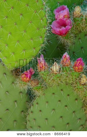 Cactus Leaves And Flowers Composition.