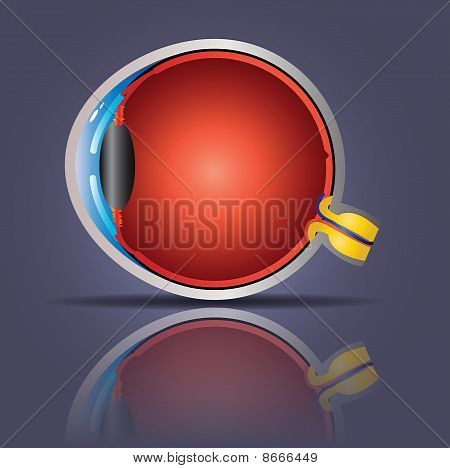 Glowing eye anatomy isolated on a purple background poster