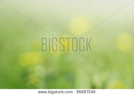 blurred spring background; defocused