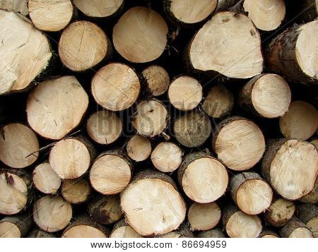 cut trunks