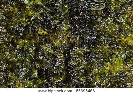 Dried seaweed Laminaria or seaweed background close-up