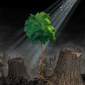 Renewal and hope Life and recovery concept as a green leaf tree shaped as a human head growing out of landscape of chopped forest as survival symbol for rebirth and creating a new you after an addiction or crisis. poster
