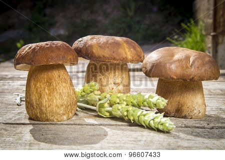 Fresh Boletus Edilus Mushrooms On A Wooden Table