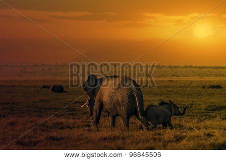 Sunset In Amboseli
