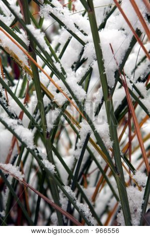 A Snow-Covered Grass