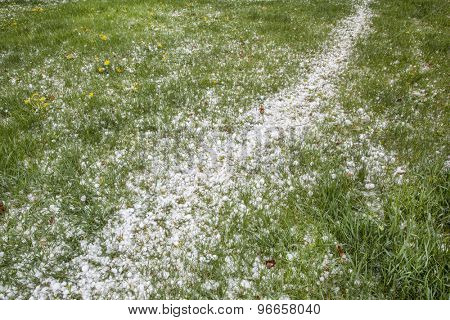 hailstones covering backyard lawn after springtime hail storm
