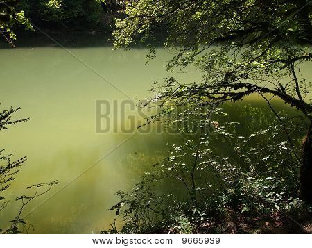 Green River With Reflections Of Trees On The Water, France, The Alps