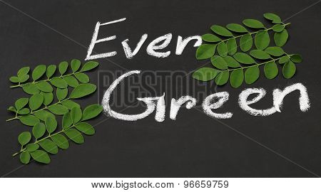 Moringa Leaves With Written Ever Green