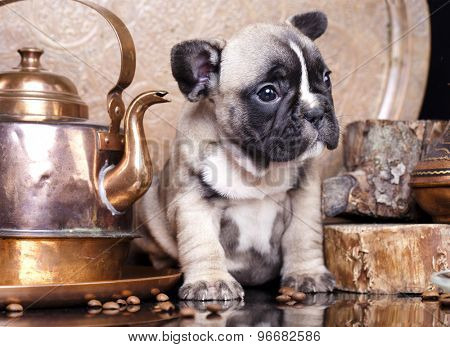 French Bulldog and coffee