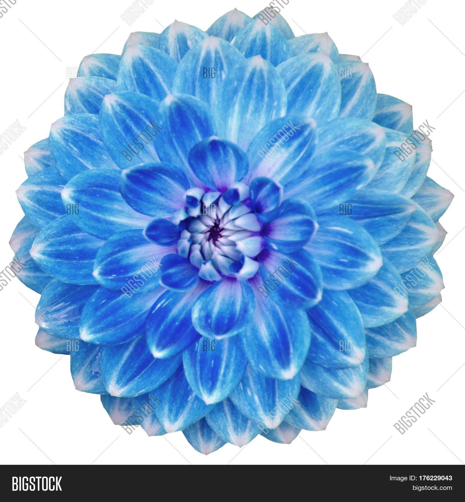 Close Single Blooming Image Photo Free Trial Bigstock