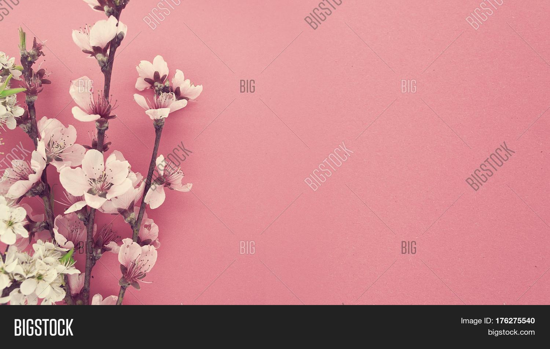 Blooming Sakura Image Photo Free Trial Bigstock