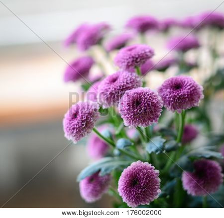 Purple Flowers At Sunny Day