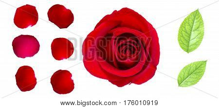 Red rose petals and rose leaf isolated on white with clipping path