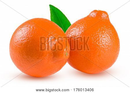 two orange tangerine or Mineola with leaf isolated on white background.