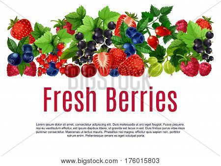Berries poster or banner template. Fresh vector blackberry or blueberry, black currant and redcurrant, cherry and raspberry harvest. Forest strawberry, gooseberry and briar berry fruits crop