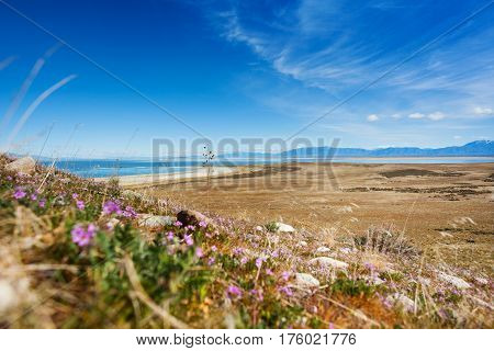 Sparse vegetation on the lakeside of Great Salt Lake at Antelope Island State Park, Utah, USA