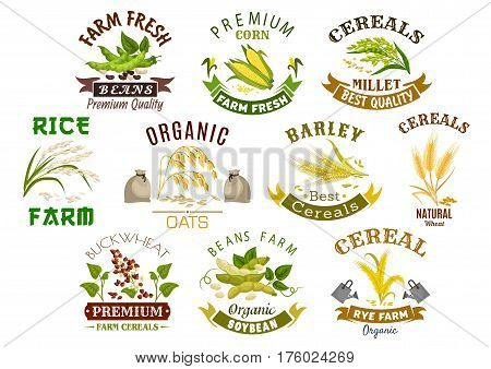 Cereal product icons. Vector symbols of wheat flour bag, rye ears and grain, buckwheat seeds and oat or barley millet and rice sheaf. Isolated agriculture corn cob and farm legume beans or pea