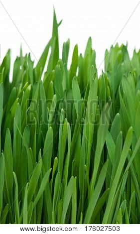 Bright green grass isolated over white background