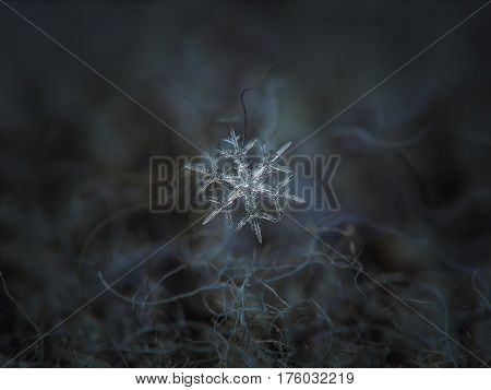 Macro photo of real snowflake: medium size snow crystal of stellar dendrite type with thin, ornate arms, many side branches, bright, star-shape center and elegant structure. Snowflake glowing on dark gray woolen background in diffused light of cloudy sky.