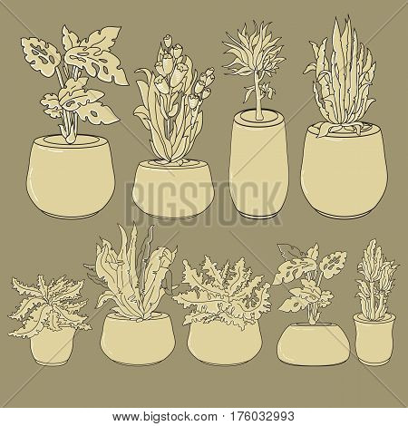 Vector set of doodle hand drawn line art house plants in ceramic pots on taupe. Flowers for interior and  garden backgrounds, floral design.