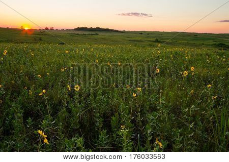 Sunset on a Midwest prairie with wildflowers