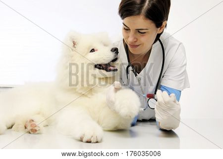 smiling veterinarian with dog in vet clinic blood exam