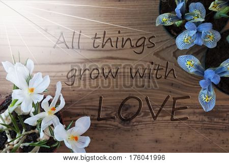 Wooden Background With English Quote All Things Grow With Love. Sunny Spring Flowers Like Grape Hyacinth And Crocus. Aged Or Vintage Style