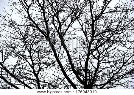 Photo Of Treetops With Leafless Trees