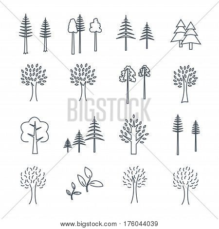 set of thin line icons pine and deciduous trees