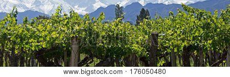 Andes & Vineyard, Lujan de Cuyo, Argentina