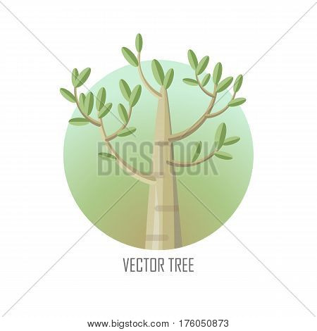 Poplar tree with green leaves. Vector tree round icon. Tree forest, leaf tree isolated, tree branch nature green, plant eco branch tree, organic natural wood illustration. Vector illustration